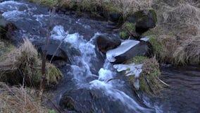 Οργανισμοί του νερού απόθεμα βίντεο