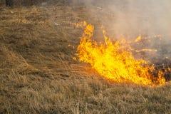 Οργιμένος δασικές πυρκαγιές άνοιξη Καίγοντας ξηρά χλόη, κάλαμος κατά μήκος της λίμνης Η χλόη καίει στο λιβάδι Οικολογική καταστρο στοκ φωτογραφία