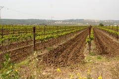 Οργωμένα furrows Hanadiv στην κοιλάδα, Ισραήλ Στοκ φωτογραφία με δικαίωμα ελεύθερης χρήσης