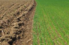 Οργωμένος τομέας εδάφους και δημητριακών Στοκ εικόνα με δικαίωμα ελεύθερης χρήσης