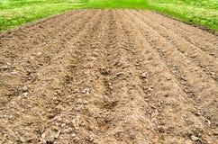 Οργωμένος τομέας εδάφους στην αγροτική ρύθμιση χωρών, τη χλόη άνοιξη και τις φρέσκες συγκομιδές Στοκ εικόνες με δικαίωμα ελεύθερης χρήσης
