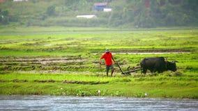 οργώνοντας με το βόδι, Pokhara, Νεπάλ απόθεμα βίντεο
