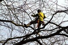 Ορειβάτης δέντρων Στοκ εικόνες με δικαίωμα ελεύθερης χρήσης