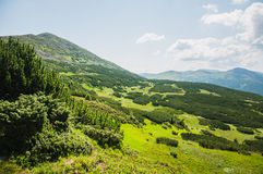 Ορεινές περιοχές Karpathian Στοκ Εικόνα