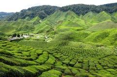 ορεινή περιοχή Μαλαισία τ&o Στοκ Εικόνες