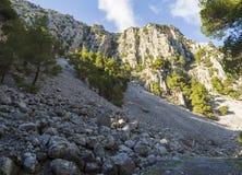 Ορεινός γρήγορος ποταμός με τα σαφή πλατάνια νερού και στο δάσος στα βουνά Dirfys στο νησί της Εύβοιας, Ελλάδα στοκ φωτογραφία με δικαίωμα ελεύθερης χρήσης