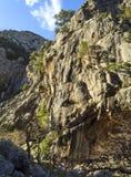 Ορεινός γρήγορος ποταμός με τα σαφή πλατάνια νερού και στο δάσος στα βουνά Dirfys στο νησί της Εύβοιας, Ελλάδα στοκ εικόνες με δικαίωμα ελεύθερης χρήσης