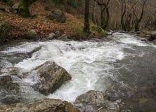 Ορεινός γρήγορος ποταμός με το σαφές νερό στο δάσος στα βουνά Dirfys στο νησί της Εύβοιας, Ελλάδα στοκ εικόνα