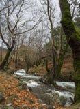 Ορεινός γρήγορος ποταμός με το σαφές νερό στο δάσος στα βουνά Dirfys στο νησί της Εύβοιας, Ελλάδα στοκ εικόνες