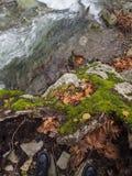 Ορεινός γρήγορος ποταμός με το σαφές νερό στο δάσος στα βουνά Dirfys στο νησί της Εύβοιας, Ελλάδα στοκ εικόνες με δικαίωμα ελεύθερης χρήσης