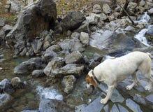 Ορεινός γρήγορος ποταμός με το σαφές νερό στο δάσος στα βουνά Dirfys στο νησί της Εύβοιας, Ελλάδα στοκ φωτογραφία