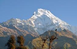 Ορεινός όγκος Annapurna. Νεπάλ. Στοκ εικόνα με δικαίωμα ελεύθερης χρήσης