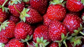 Ορεκτικές και όμορφες φράουλες νωπών καρπών ως υπόβαθρο τροφίμων Οργανική υγιής ώριμη διατροφή φραουλών απόθεμα βίντεο