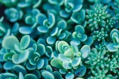 Ορθογώνια ρύθμιση των succulents Κάκτος succulents σε έναν καλλιεργητή Στοκ Εικόνα