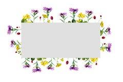 Ορθογώνιο πλαίσιο Watercolor των άγριων λουλουδιών ελεύθερη απεικόνιση δικαιώματος