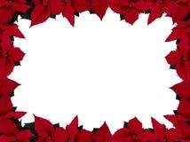 ορθογώνιο poinsettia πλαισίων Στοκ Εικόνες