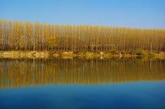 οριζόντια δέντρα αντανάκλασης εικόνας Στοκ εικόνα με δικαίωμα ελεύθερης χρήσης