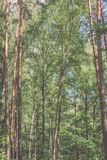 Οριζόντια εικόνα του πολύβλαστου πρόωρου φυλλώματος άνοιξη - δονούμενη πράσινη SP Στοκ Εικόνες