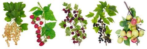 Οριζόντια επιτροπή με τα φρούτα Στοκ Φωτογραφίες