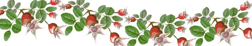 Οριζόντια λουλούδια εμβλημάτων κυμάτων Dogrose διανυσματική απεικόνιση