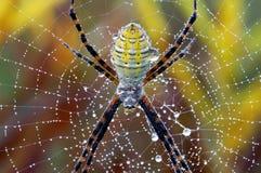 οριζόντια μακρο αράχνη κήπω Στοκ Φωτογραφίες