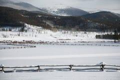 Οριζόντια χειμερινή θέα βουνού του Winter Park, Κολοράντο Στοκ Εικόνα