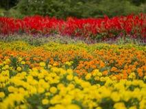 Οριζόντιος τομέας λουλουδιών λωρίδων στη νεφελώδη ημέρα Στοκ φωτογραφία με δικαίωμα ελεύθερης χρήσης