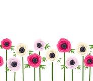 Οριζόντιο άνευ ραφής υπόβαθρο με τα λουλούδια anemone Στοκ Φωτογραφίες