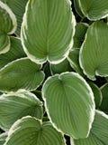 Οριοθετημένα φύλλα στοκ εικόνες