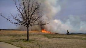 Ορισμένο πυρκαγιά έγκαυμα πυρκαγιάς ξηρού χόρτου με τις φλόγες και τον καπνό o φιλμ μικρού μήκους