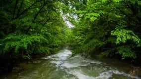 Ορμητικά σημεία ποταμού ποταμών στο δάσος σε αργή κίνηση απόθεμα βίντεο