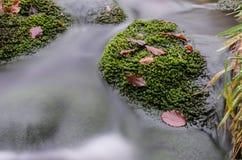 Ορμητικά σημεία ποταμού σε Jizera Στοκ Φωτογραφίες