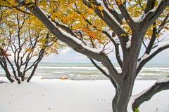 Ορντού, Τουρκία Στοκ εικόνες με δικαίωμα ελεύθερης χρήσης