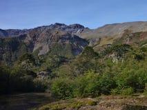 Οροσειρά κορυφογραμμή της Νεβάδας στα araucarias las Στοκ Φωτογραφίες