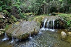 Οροσειρά περιβαλλοντικά προστατευόμενη περιοχή βιόσφαιρας του Ροσάριο, Pinar del Rio Στοκ Φωτογραφίες