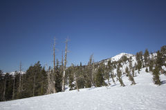Οροσειρά σειρές χιονιού της Νεβάδας στοκ εικόνα με δικαίωμα ελεύθερης χρήσης