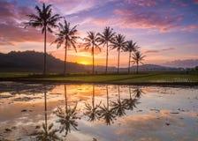 Ορυζώνας ο όμορφος το πρωί στοκ εικόνες