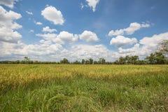 Ορυζώνας ρυζιού στην Ταϊλάνδη με το μπλε ουρανό με το σύννεφο στο μεσημέρι ουρανού Στοκ φωτογραφία με δικαίωμα ελεύθερης χρήσης
