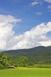ορυζώνας Ταϊλανδός πεδίων στοκ εικόνες
