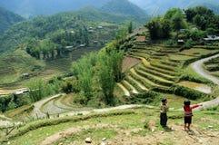 Ορυζώνας του Βιετνάμ Sapa Στοκ Εικόνα