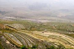 Ορυζώνες ρυζιού σε Sapa, Βιετνάμ Στοκ Εικόνα