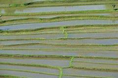 ορυζώνες του Μπαλί στοκ φωτογραφία με δικαίωμα ελεύθερης χρήσης