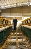 Ορυχείο ψευδάργυρου Μηχανικός που περπατά στα μηχανήματα ελέγχου στο εργοστάσιο Στοκ Φωτογραφία