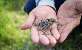 Ορφανά από μητέρα πουλιά Στοκ φωτογραφία με δικαίωμα ελεύθερης χρήσης