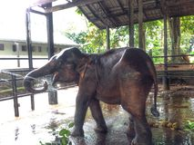 Ορφανοτροφείο ελεφάντων Στοκ εικόνες με δικαίωμα ελεύθερης χρήσης