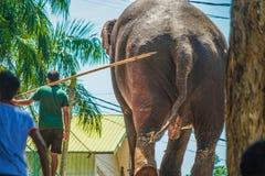 Ορφανοτροφείο Σρι Λάνκα Pinnawara ελεφάντων στοκ εικόνες