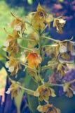 Ορχιδέα λουλουδιών εγκαταστάσεων στοκ εικόνες
