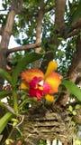 Ορχιδέα, λουλούδι, ταϊλανδική ορχιδέα στοκ φωτογραφίες