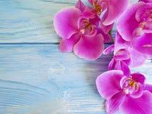 ορχιδεών διακοσμητικά πέταλα ανθοδεσμών λουλουδιών φυσικά εξωτικά σε ένα μπλε ξύλινο υπόβαθρο στοκ φωτογραφίες με δικαίωμα ελεύθερης χρήσης