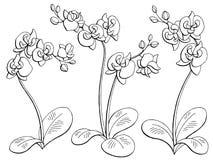 Ορχιδεών καθορισμένο διάνυσμα απεικόνισης σκίτσων λουλουδιών γραφικό μαύρο απομονωμένο λευκό Στοκ φωτογραφία με δικαίωμα ελεύθερης χρήσης